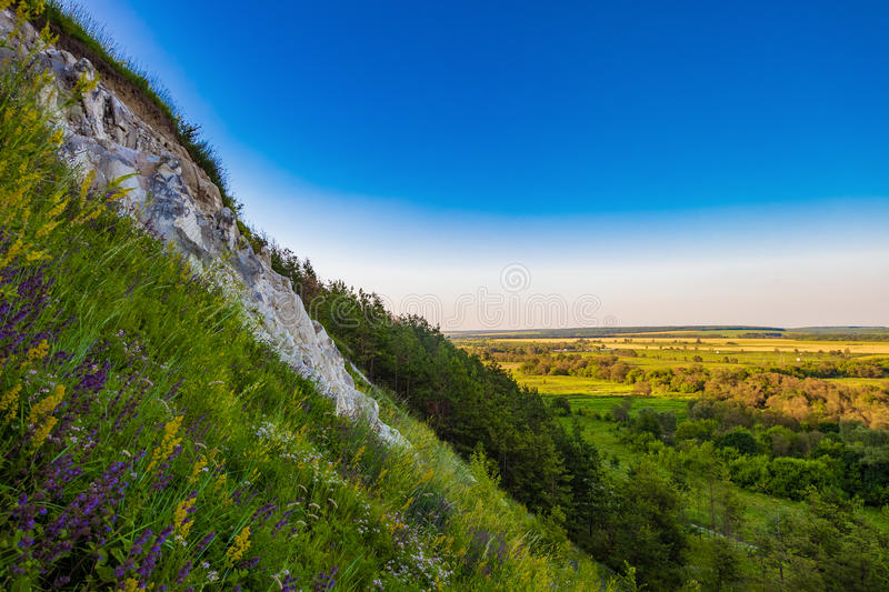 Chalk hill. The steep slope of the chalk mountain overlooking the green valley. Relic pine trees on a slope stock photography