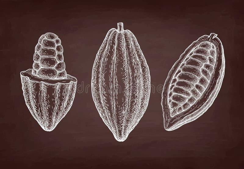 Chalk sketch of cocoa. Cocoa fruits. Chalk sketch on blackboard background. Hand drawn vector illustration. Retro style stock illustration