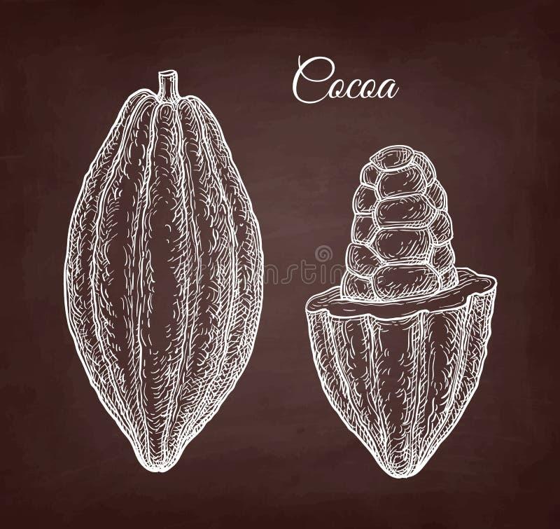 Chalk sketch of cocoa. Cocoa pod. Chalk sketch on blackboard background. Hand drawn vector illustration. Retro style royalty free illustration