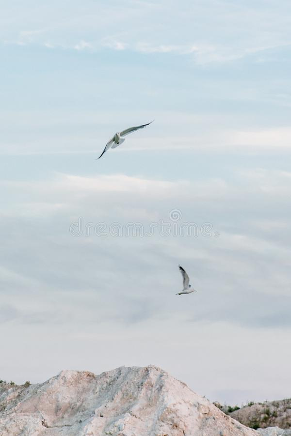 Gulls fly in the sky over a mountain lake stock images
