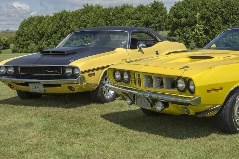 Challenger and cuda. St-liboire august 8, 2015 front side view of two yellow cars a dodge challenger and plymouth cuda sitting on the grass during car show stock images