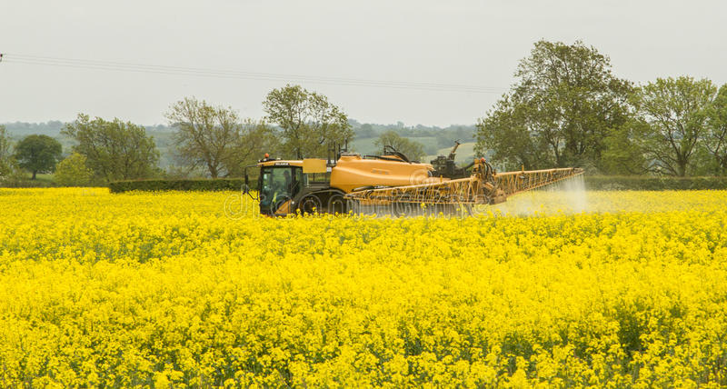 Challenger Rogator sprayer in action spraying rapeseed oil in full flower. Challenger Ag Global Rogator RG655 sprayer in action spraying rapeseed oil in full stock images