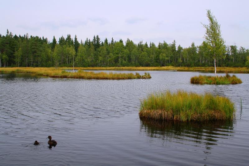 Chalupska板条,在捷克共和国的泥煤沼泽 免版税图库摄影