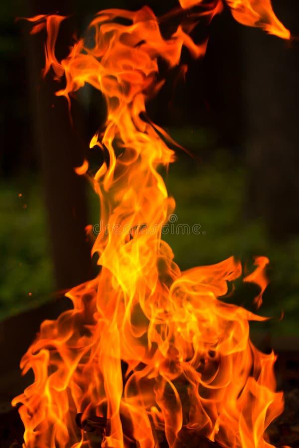 Chamas do fogo no fundo escuro fotos de stock royalty free