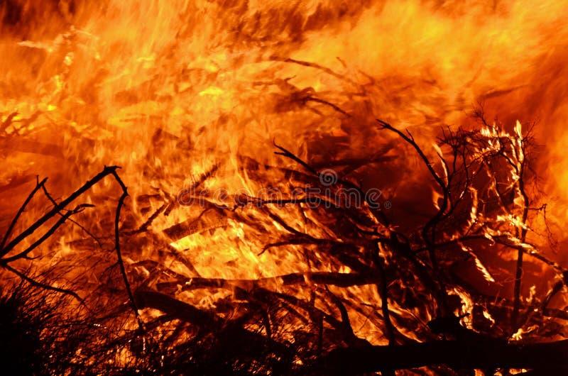 Chamas selvagens do fundo abstrato do fogo do arbusto imagens de stock royalty free