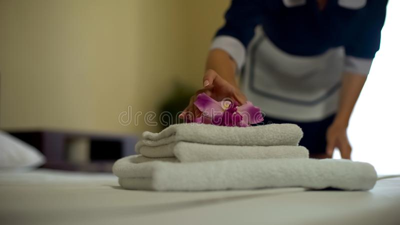 Chambermaid putting fragrant flower on clean white towels pile, housekeeping. Stock photo stock images