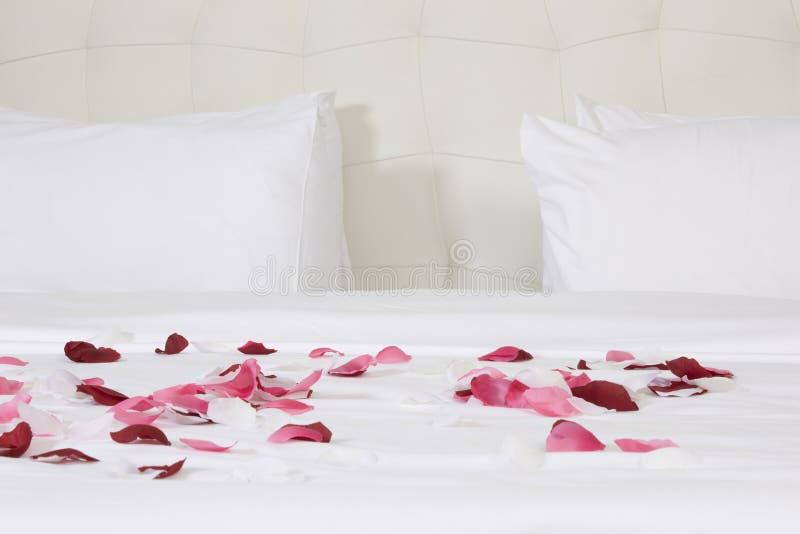 Chambre d'hôtel avec le grand lit et le rouge photos libres de droits