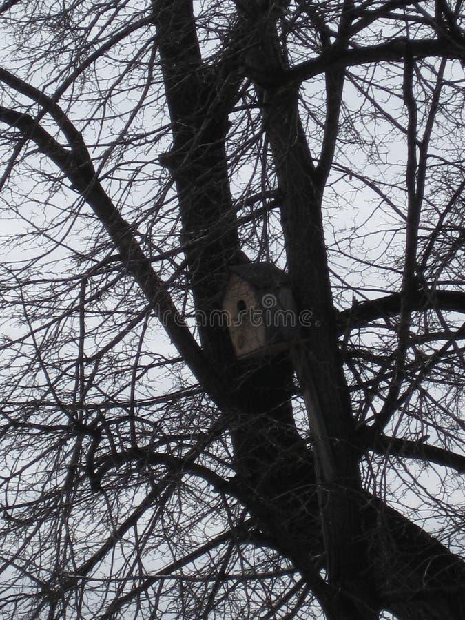Chambre d'oiseau dans l'arbre photo libre de droits