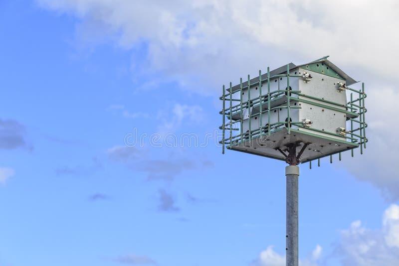 Chambre d'oiseau de Martin pourprée images libres de droits