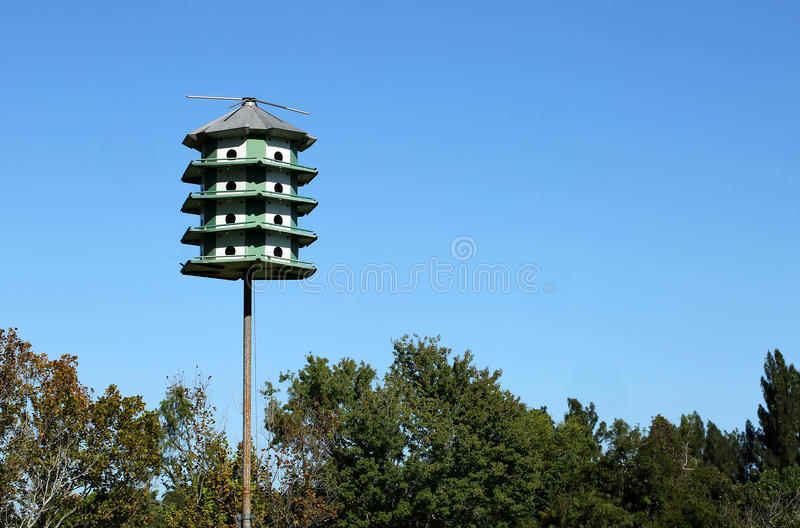 Chambre d'oiseau de Martin pourprée photo libre de droits