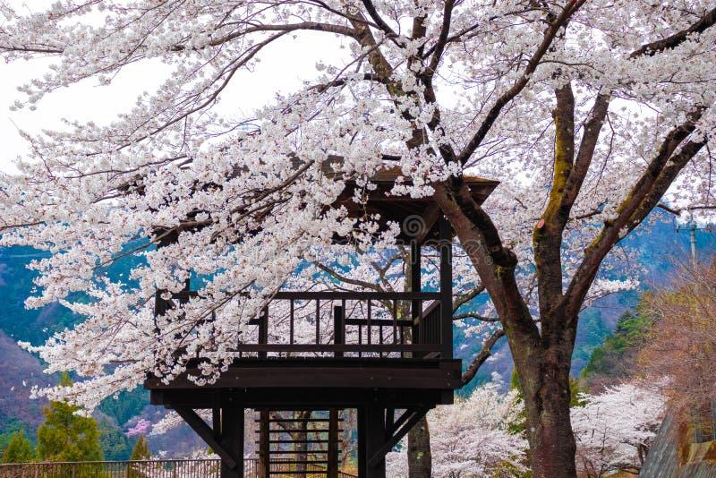 Chambre dans l'arbre de Sakura photo stock