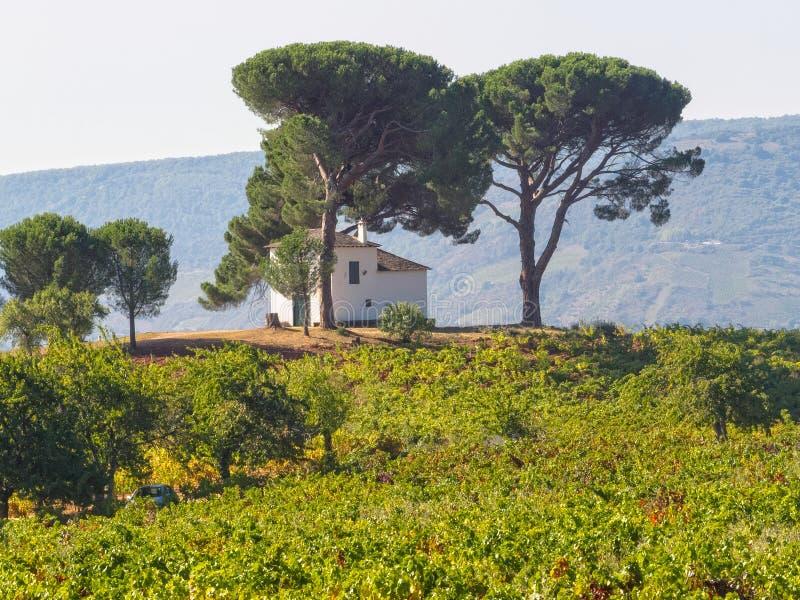 Chambre dans le vignoble - Villafranca del Bierzo images libres de droits