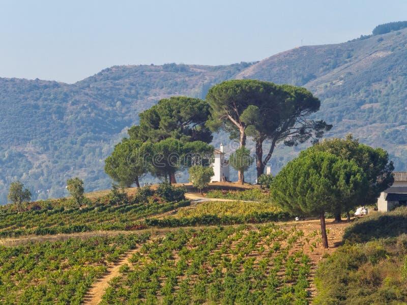 Chambre dans le vignoble - Villafranca del Bierzo photo stock