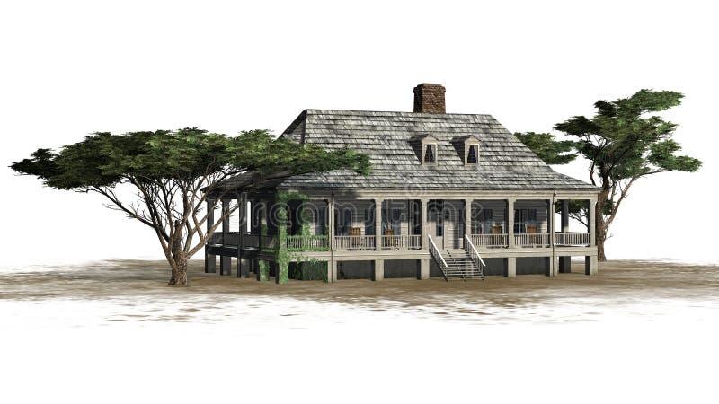 Chambre de plantation avec le pin de parapluie illustration libre de droits