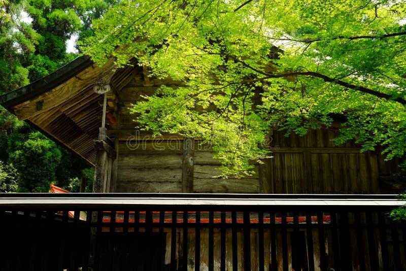 Chambre et arbre photographie stock libre de droits