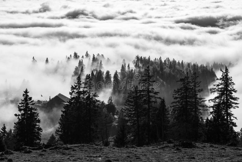 Chambre et arbres se fanant loin sous le brouillard photographie stock libre de droits