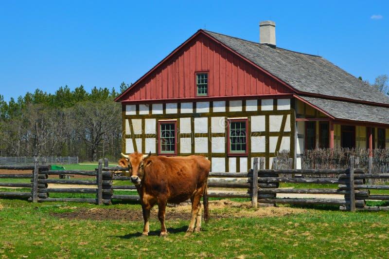 Chambre historique de ferme de Schultz de vache images libres de droits