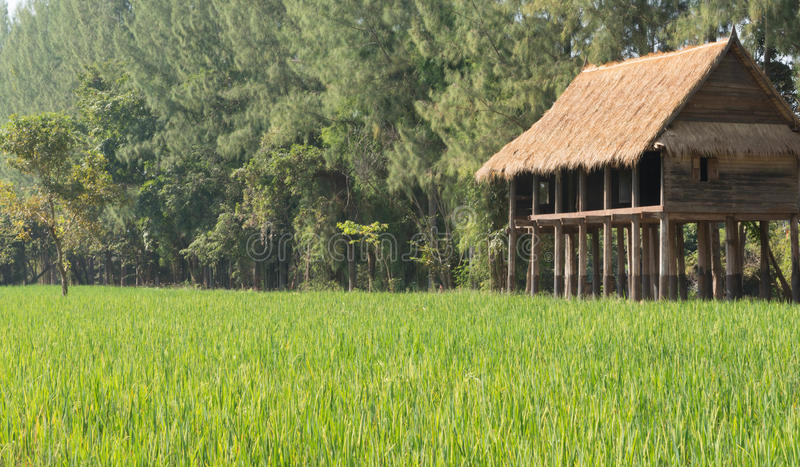 Chambre par le champ de la Thaïlande rurale photographie stock libre de droits