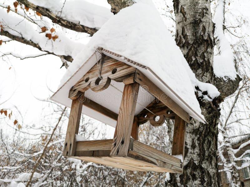 Chambre pour des oiseaux sur un arbre en hiver images libres de droits