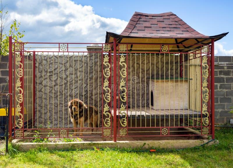 Chambre pour le chien image stock. Image du chenil, noir - 61293015