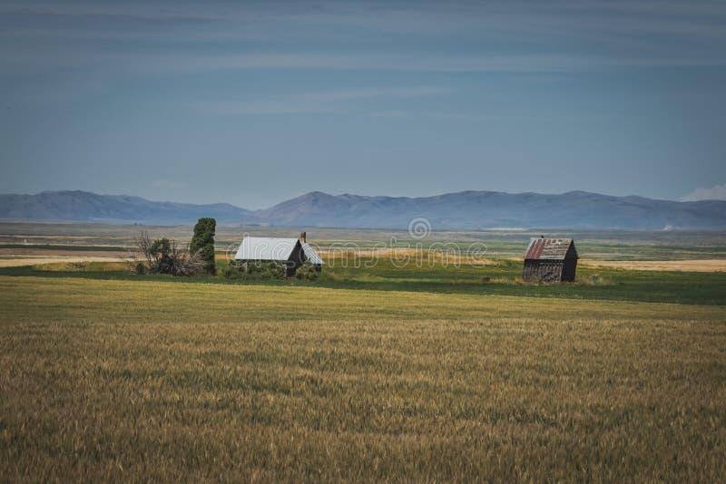 Chambre rustique abandonnée dans un domaine de blé image libre de droits