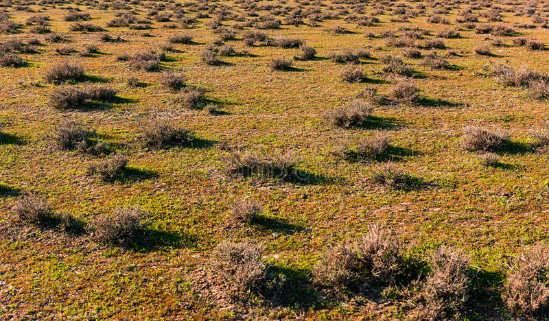 Chameau-épine photo stock