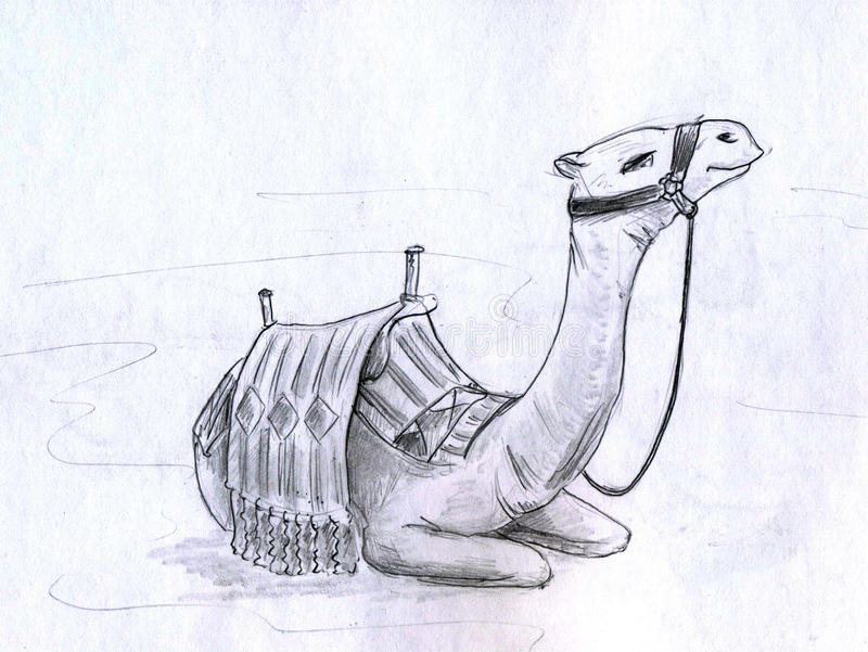 Chameau illustration stock