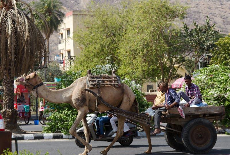 chameau avec un char sur la rue dans la capitale d'un usager de la route photos stock