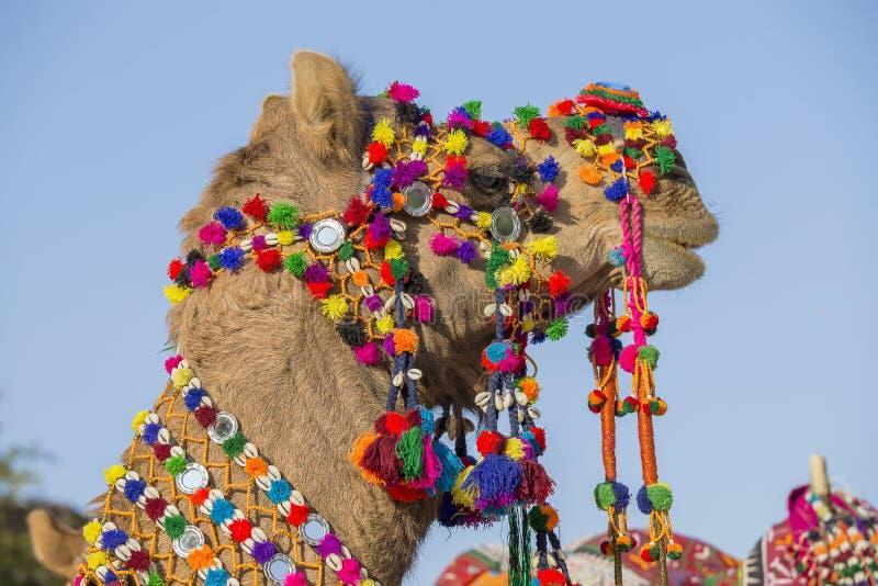 Chameau décoré au festival de désert dans Jaisalmer, Ràjasthàn, Inde images stock