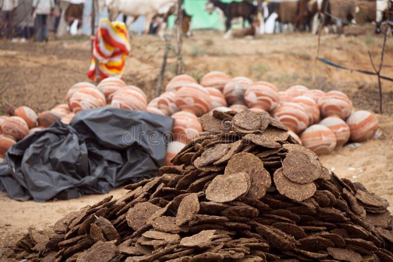 Chameau et bouse de vache secs photographie stock libre de droits