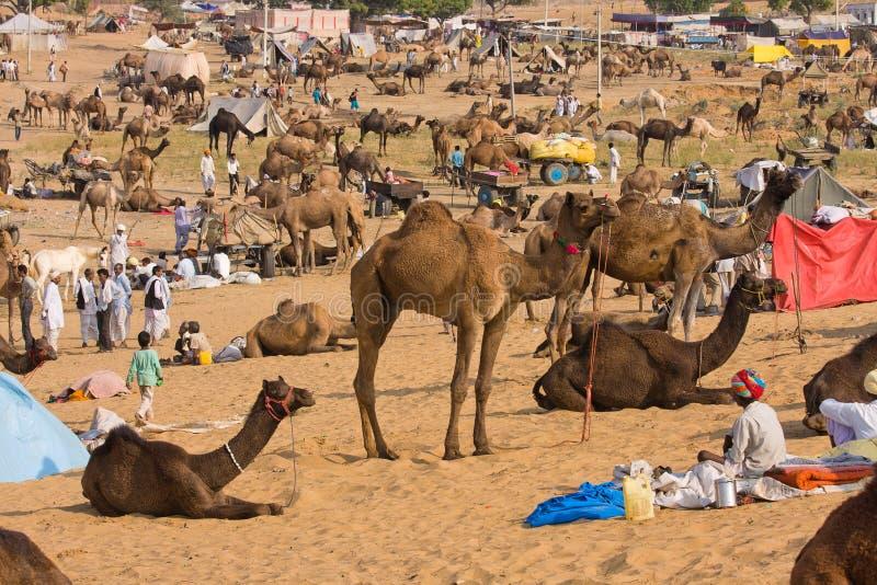 Chameau Mela (chameau de Pushkar de Pushkar juste) images stock