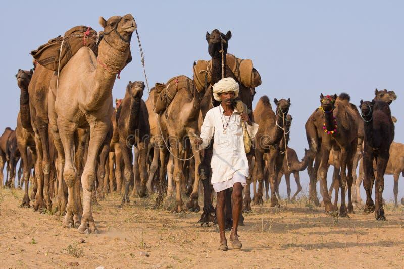 Chameau Mela (chameau de Pushkar de Pushkar juste) photos stock