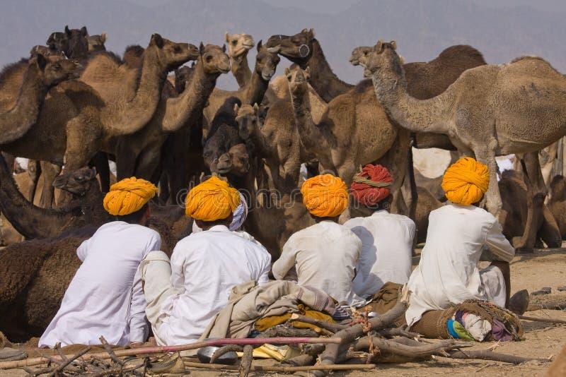 Chameau Mela (chameau de Pushkar de Pushkar juste) images libres de droits