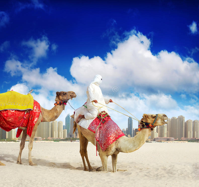 Chameau sur la plage de Dubaï photo stock