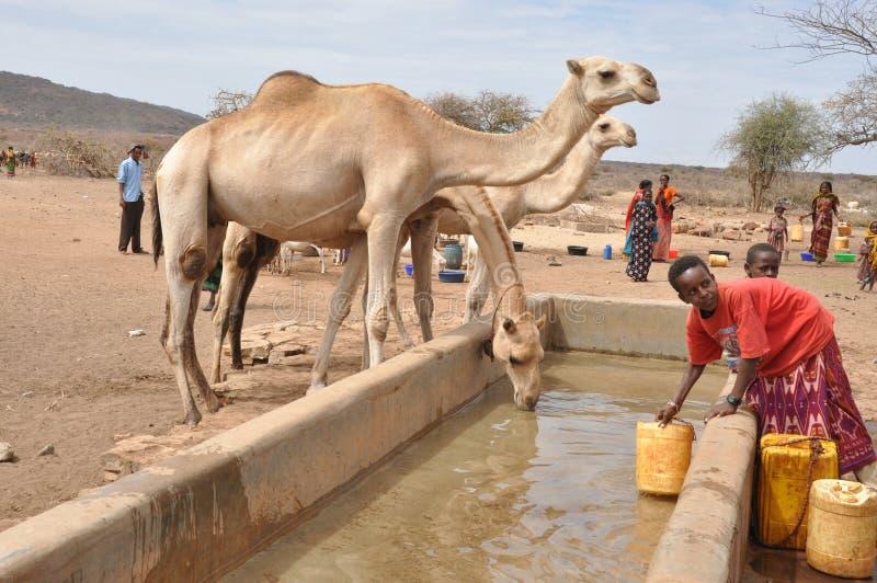 Chameaux à une vie pastorale point-africaine de l'eau photo stock