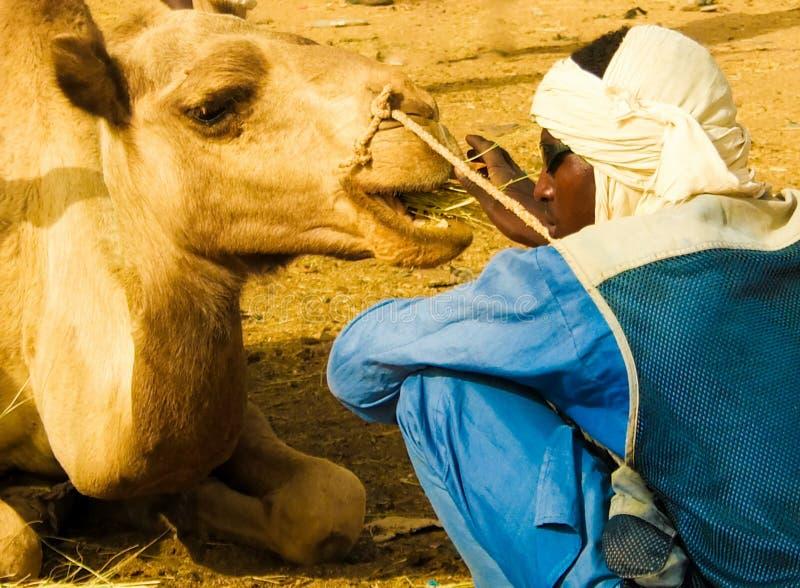 Chameaux au march? aux bestiaux local dans Agades, air, Niger photographie stock libre de droits