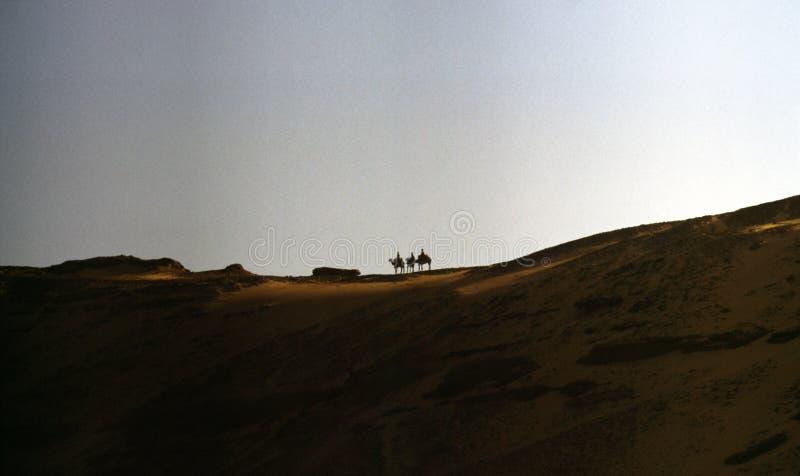 Chameaux dans un désert photos stock