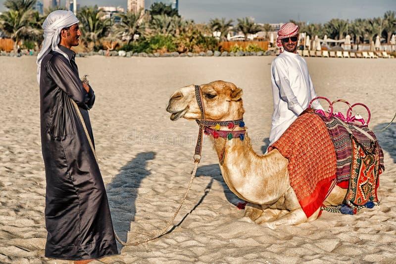 Chameaux du DUBAÏ sur le fond de gratte-ciel à la plage Style de plage de la marina JBR des EAU Dubaï : chameaux et gratte-ciel photos libres de droits