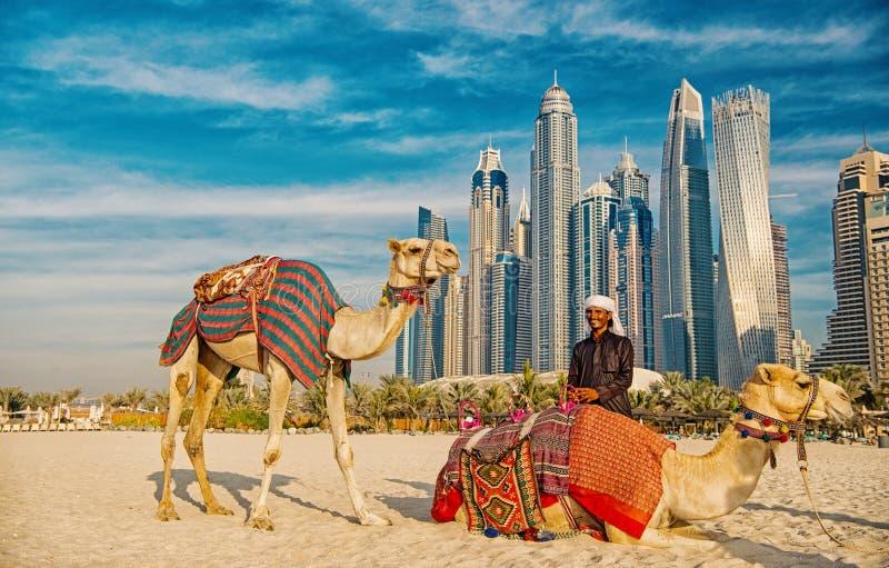 Chameaux sur le fond de gratte-ciel à la plage Style de plage de la marina JBR des EAU Dubaï : chameaux et gratte-ciel photo libre de droits