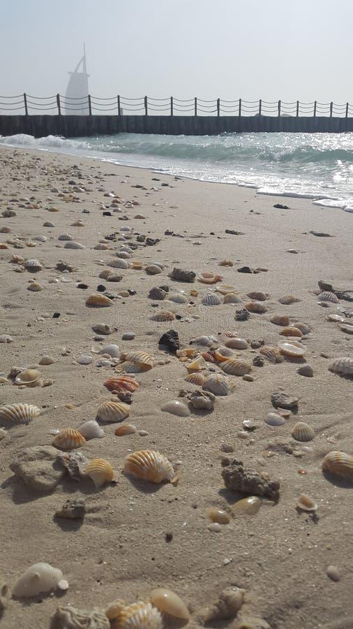 Chameaux sur une plage de Dubaï images libres de droits