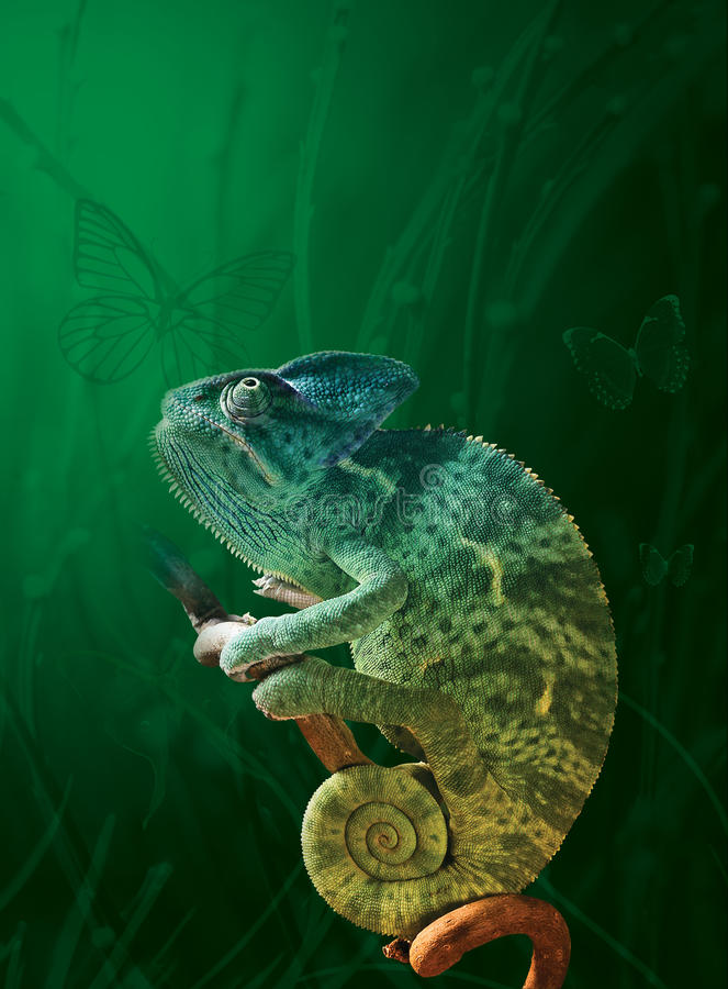 Chameleon. Bright Chameleon and green meadow