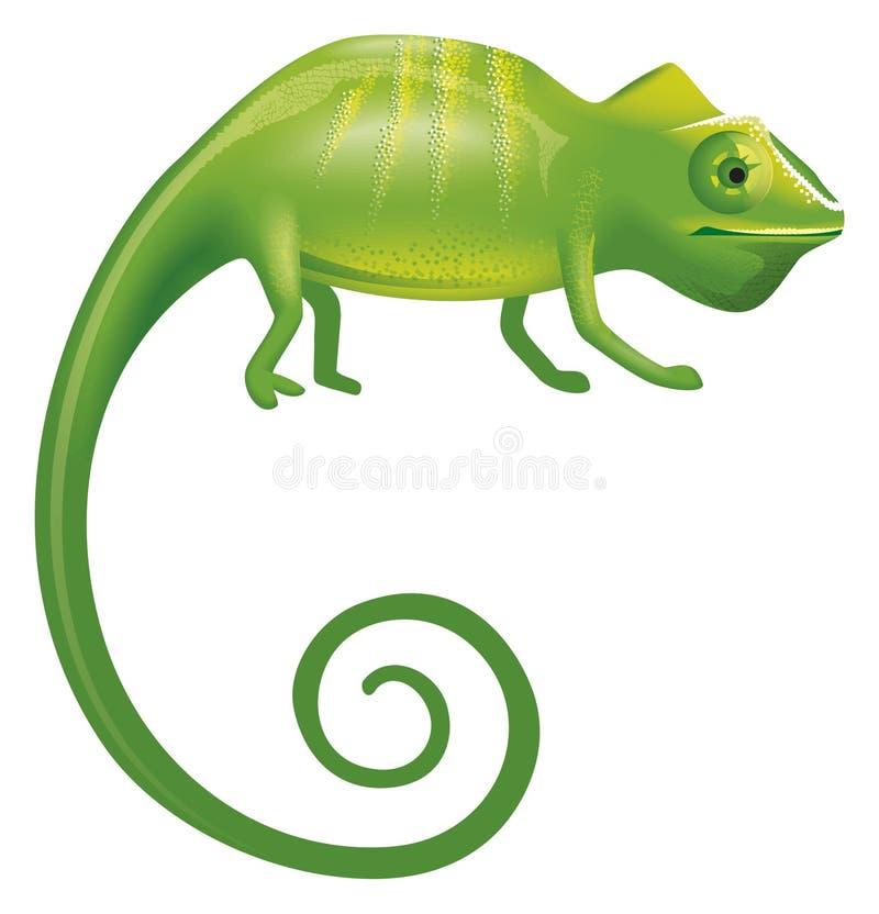Download Chameleon Stock Photos - Image: 12130943
