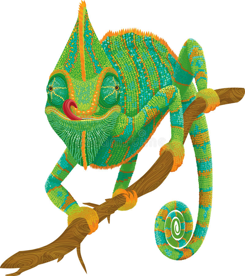 Chameleon stock illustration