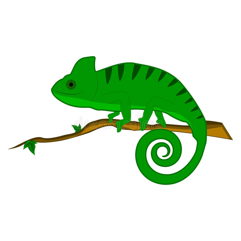 Chameleon on the branch vector illustration. Green chameleon on the branch vector illustration royalty free illustration
