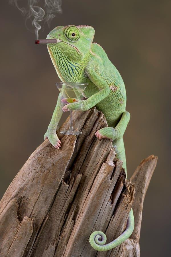 Free Chameleon Cocktail Hour Stock Photo - 4652050
