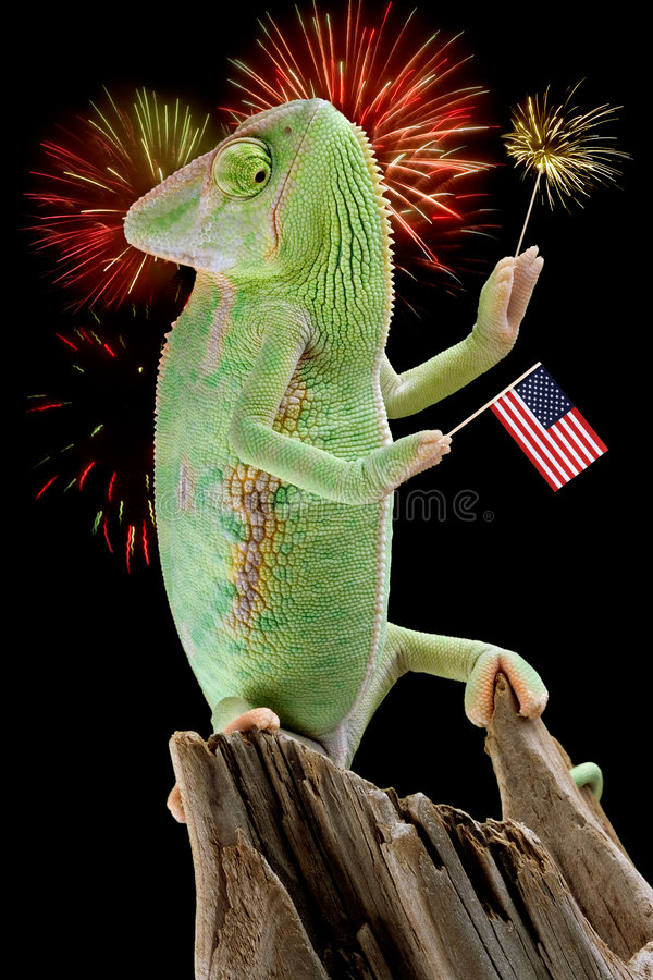 Chameleon Fireworks royalty free stock photos