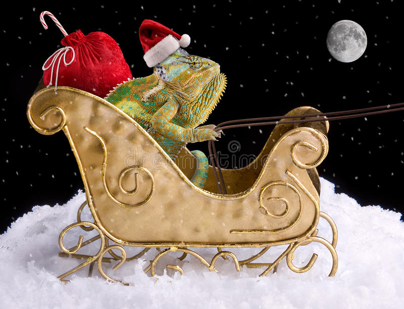 Chameleon Santa fotografia stock