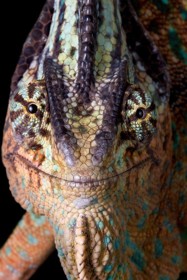 Chameleon Smile Stock Photography