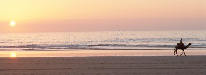 Chamelier στην καμήλα του στο ηλιοβασίλεμα στην παραλία Μαρόκο άμμου στοκ εικόνα με δικαίωμα ελεύθερης χρήσης