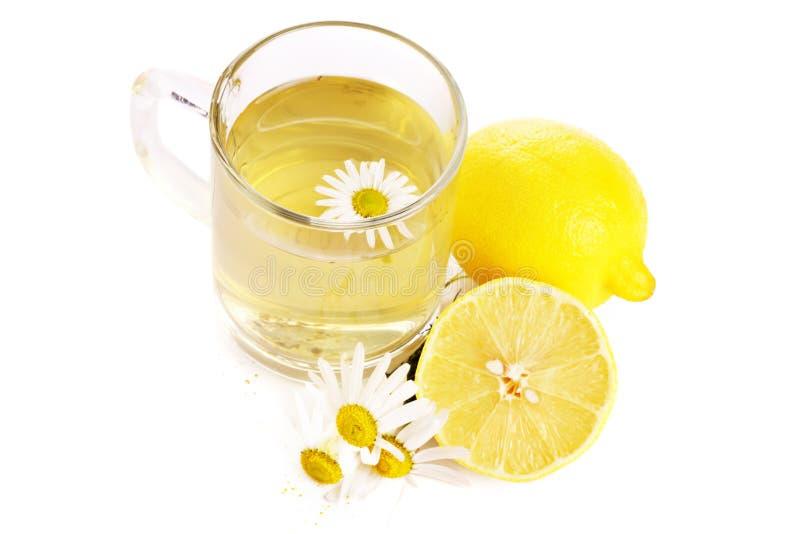chamomile βοτανικό τσάι στοκ εικόνες με δικαίωμα ελεύθερης χρήσης
